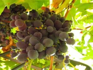 Weinfest in Poppi - Toskana